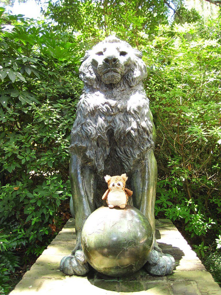 The World\'s Best Photos of brookgreen and lion - Flickr Hive Mind