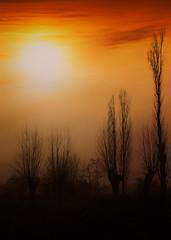 Alberi al tramonto (tampurio) Tags: sunset sky italy sun sunlight tree fog alberi clouds sunrise italia tramonto nuvole sony foggy hills cielo tramonti sole padova collieuganei torreglia slta58