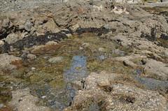(sarabuchner) Tags: ocean california vacation sealife newportbeach tidepools underthesea