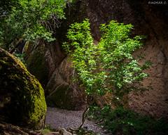 SHADY PATH (-Dagmar-) Tags: trees landscape rocks trail backlighting pinnacles