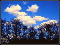"""Cloudy Blue Sky & Forest - Photo by STEVEN CHATEAUNEUF - April 19, 2014 (snc145) Tags: blue trees sky white black nature colors beautiful silhouette clouds forest landscape outdoors photography photo spring scenery colorful pretty seasons bright photos dusk vivid digitalcamera bold """" autofocus flickrunitedaward stevenchateauneuf lovelymotherearth"""" olympussz14 april192014"""