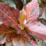 Inverness Botanic Garden thumbnail