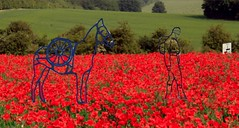 Causeway roundabout concept (Two Circles Design) Tags: school two horse ford festival museum soldier design memorial war blind rebecca mark circles great roundabout august poppies ww1 remembrance micheal primary arundel causeway serviceman centenery morpurgo centanery causewayroundabout