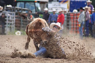 Live To Steer Wrestle