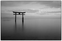 Shirahige Shrine (Masahiko Kuroki (a.k.a miyabean)) Tags: bw noiretblanc le 鳥居 琵琶湖 白髭神社 fujixe1 fujifilmsuperebcxf2841855mm