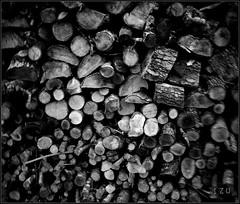 Wood (edu_izu) Tags: