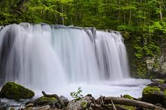Oirase Gorge Waterfall, Towada, Aomori Prefecture, Japan (Featured in Explore) (leonardrandle1) Tags: water japan landscape waterfall outdoor gorge serene towada oirase  serence aomoriprefecture oirasegorgewaterfall