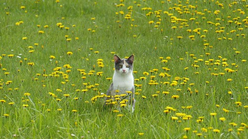 Katze am Hopfensee