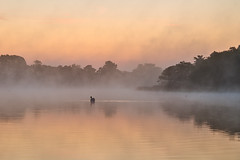 Dawn on the Norfolk Broads (Steven Docwra) Tags: summer england mist lake holiday art nature water beautiful silhouette digital landscape photography dawn nationalpark am swan nikon photographer image vibrant framed fineart norfolk earlymorning peaceful tranquility atmosphere nopeople canvas swans photograph naturereserve openspace broad magical artforsale tranquil atmospheric eastanglia eastcoast anglia aonb englishlakes norfolkbroads stockimage fineartprint beautyinnature touristdestination thebroads eastofengland framedprint norfolkengland framedimage vastexpanse holidaydestination beautifuldawn risingmist swanwildfowl areaofoutstandingnaturalbeauty imagestock nikond800 norfolklandscape broadsnationalpark colourfuldawn norfolkbroadsnationalpark trinitybroads stevedocwra stevedocwraphotography norfolkbasedphotographer norfolklandscapeprintsforsale imagelicence