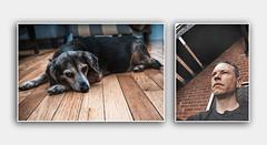 goodbye maddie (Eric Baggett) Tags: pet love loss puppy madison xo goodbye