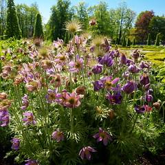 shining (Darek Drapala) Tags: park flowers light plants sun flower color nature sunshine lumix shine poland polska panasonic shinihg panasonicg5