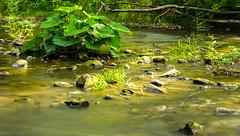 Mittendrin (thorvonasgard) Tags: plants nature water river wasser natur pflanzen fluss saarland schmelz prims