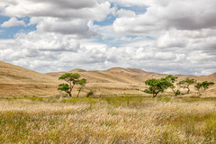California Grassland (Kirk Lougheed) Tags: california statepark sky usa cloud plant tree grass clouds landscape spring unitedstates outdoor hills hillside grassland mercedcounty sanluisreservoirstaterecreationarea