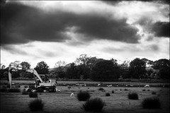 A Thorn Amongst The Roses? (pike04) Tags: bw black evening spring moody sheep farm sony may digger a5000 emount
