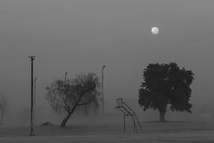 animal mitolgico (Des oxirribonucleico) Tags: niebla