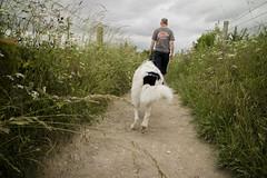 Dog walk (jackpeden97) Tags: dog pets nature path walk