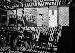 Shadow Stripes (geowelch) Tags: toronto blackwhite 35mmfilm urbanlandscape pentaxmx urbanfragments xp2super400 rogersroad pentaxm50mmf17 plustekopticfilm7400