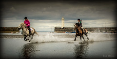 Ride on By (D.k.o.w) Tags: horses lighthouse seascape canon landscape harbour 7d northernireland splash seafront trot gallop riders mkii donaghadee irishsea northdown