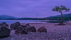 Millarorchy Bay (MC Snapper78) Tags: tree landscape scotland lochlomond lonelytree balmaha nikond3300 millarorchy marilynconnor