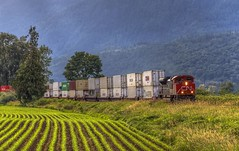 Westbound CN Train (Paul Rioux) Tags: morning trees mountains industry cn train bc outdoor britishcolumbia rail railway cargo transportation locomotive freight chilliwack canadiannational fraservalley prioux
