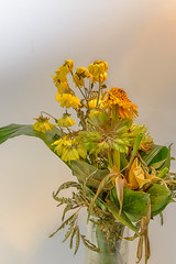 DSC_3617 (Sellassi Mic) Tags: flower sexy green fleur girl fruits yellow jaune vert citrus rotten citron flowerpicturesnolimits