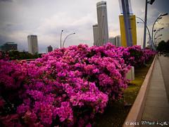 flowers (Squall EC) Tags: river hotel bay flyer singapore esplanade mbs marinabay raffleshotel singaporeflyer marinabaysands
