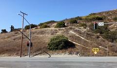 Toyon (Heteromeles arbutifolia) on Santiago Canyon Road (Daralee's Web World photos) Tags: toyon orangeca santiagocanyonroad toyonheteromelesarbutifolia