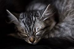 Kitten in en om huis (Marjan van de Pol) Tags: dordrecht 6d canon6d canon grace kitten nederland favorite fave faved