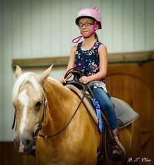 Show day-41 (Webbed Foot Photo) Tags: horses horse pennsylvania ponycamp webbedfootphotography pentaxk1 opengateranch darrenolsen dtolsen webbedfootphoto hunterhillsfarm