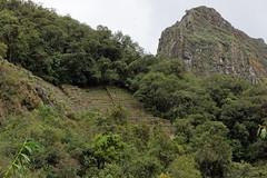 Tarasy uprawne Machu Picchu | Agricultural terraces of Machu Picchu