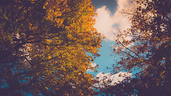Autumn - Belle Isle (alexwhecht) Tags: park autumn trees sky fall nature leaves clouds us unitedstates michigan detroit 2015