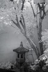 DSC_3778s (An Xiao) Tags: arboretum bonsai penjing