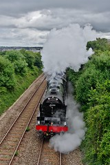 Royal Scot Debut on Riviera Line (Better Living Through Chemistry37) Tags: transport steam railways locomotives lms royalscot steamlocomotives railtours 46100 torbayexpress hollicombe 1z28