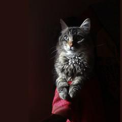 Leo (archifra -francesco de vincenzi-) Tags: portrait italy cat square chat italia leo retrato gato gatto ritratto carré micio molise isernia archifraisernia absolutelyperrrfect bestcapturesaoi francescodevincenzi
