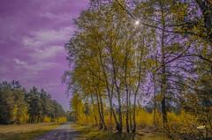 Frhling (ubl57) Tags: germany deutschland spring wolken grn sonne ems allemagne emsland lingen niedersachsen birken frhling