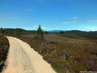 Abernethy Forest 2