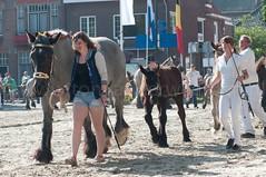 DSC_2231 (Ton van der Weerden) Tags: horses horse dutch de cheval belgian nederlands belges draft chevaux belgisch trait ijzendijke trekpaard trekpaarden