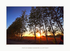 D90-2011-11-27-173511 copy