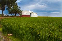 La casa de l'Arrossar (christian&alicia) Tags: landscape nikon sigma delta natura catalonia catalunya 18200 hdr arros paisatge ebre catalogne d90 christianalicia