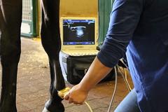 Diagnostic ultrasound