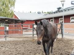 Horse (PhotoSntesis) Tags: horse caballo stable hst