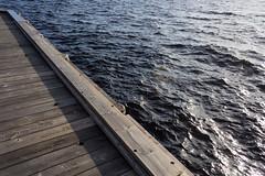 Whither do we wander? (jadzia0410) Tags: blue brown lake black water sweden jetty destination holz dalarna steg siljan impenetrable