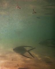 fishy (lisa cee (Lisa Campeau)) Tags: fish mexico riviera underwater maya olympus cancun waterproof tg2