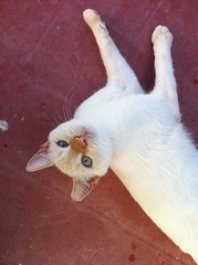 Sabio 20 (Asociacin Defensa Felina de Sevilla) Tags: espaa sevilla gatos felinos animales gatitos adoptar protectora adopciones apadrinar gatosurbanos defensafelina asociacindeanimales coloniasdegatos proteccindegatos activismoporlosanimales