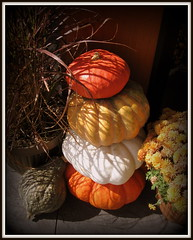 A Pile of Pretty (Puzzler4879) Tags: autumn decorations fall gourds bestwestern pointshoot falldecorations canonpowershot canondigital squashes autumndecorations canonaseries canonphotography canonpointshoot a580 canona580 powershota580 mygearandme intercoursepennsyvania bestwesternintercoursevillageinn