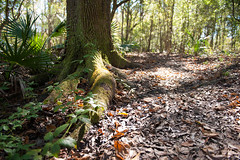 the trail traversed (ygchan) Tags: statepark trees light leaves moss louisiana hike lakefaussepointe