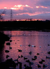 Rother Valley Sunset (diedintragedy) Tags: uk sunset red england sun lake reflection nature water birds silhouette clouds yorkshire ducks powerlines lightreflection redlight rotherh