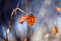 Morning Light (Sue90ca HOLIDAYS AT LAST ) Tags: morning light plants snow leaves canon bokeh 60d 55250mm