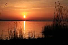 Estuaire de la Loire (rogermarcel) Tags: sunset orange landscape paysage loire waterscape roseau mygearandme mygearandmepremium mygearandmebronze rogermarcel