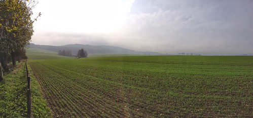 Field in Auchenbleu